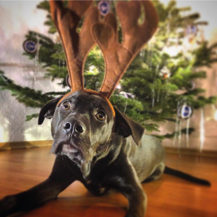 Rudy und wir wuenschen Frohe Weihnachten!